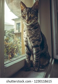 Cute grey tabby European cat resting on the window sill indoor.