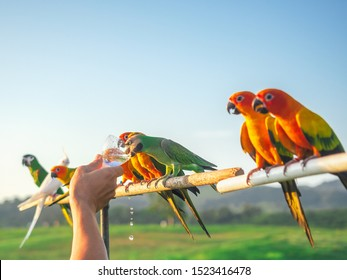 Cute group of pet parrot is eating water from its owner. This group of parrots is a pet that is left to live freely.