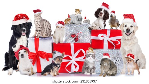 Cute Group of pets in christmas