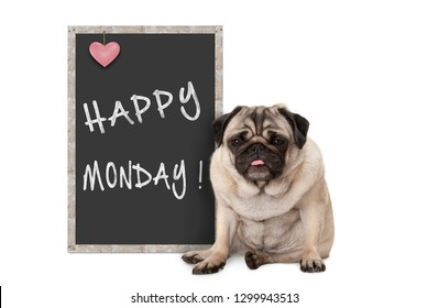 cute grumpy pug puppy dog with bad monday morning mood, sitting next to blackboard sign with text happy monday
