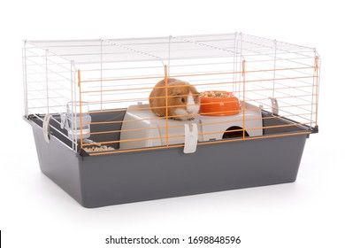 Cute guinea pig in a closed cage with sawdust on white studio isolated background