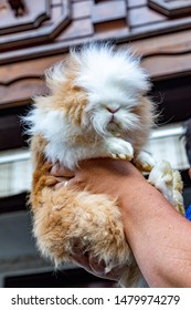 cute hairy cat holding in the hand