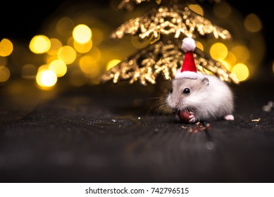 Cute hamster with santa hat on background with christmas lights