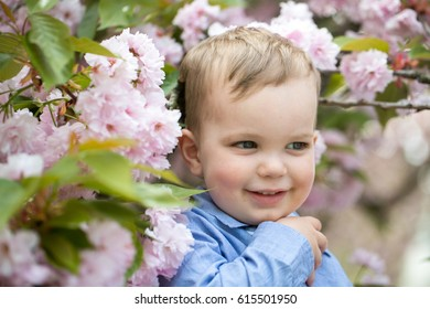 Cute happy baby boy, little child, with blond hair in blue shirt smiling among pink blossoming flowers and green leaves on sunny spring or summer day outdoors on natural background