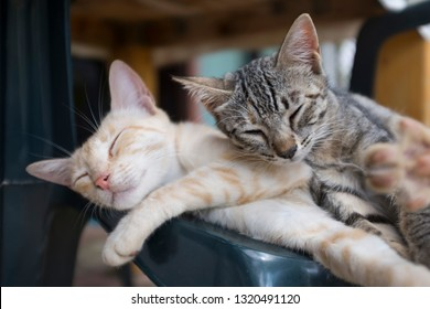 Cute and happy cats sleeping together