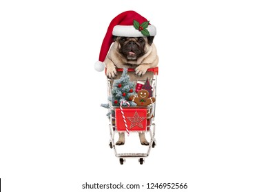 cute happy seasonal pug puppy dog with shopping cart full of christmas decoration, candy and tree, isolated on white background