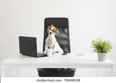cute happy young dog working on laptop at the office. pets indoors. Table with mobile phone, tablet and a plant