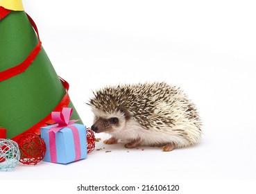 cute hedgehog baby christmas background