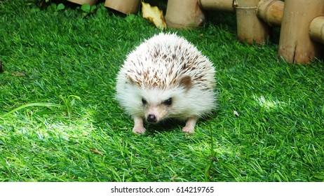 Cute hedgehog on grass