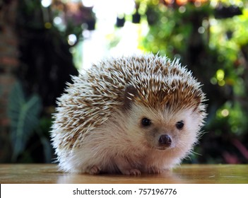 Cute hedgehog on a natural background.