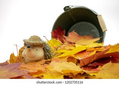 Cute hedgehog sitting in a pile of leaves