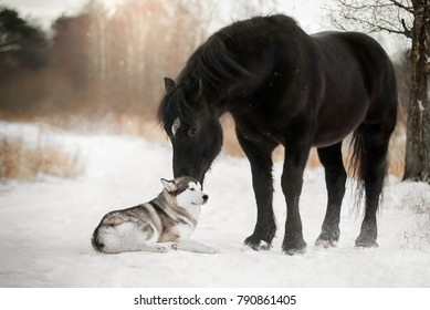 Cute horse with a dog in winter forest (Percheron and Alaskan Malamute)