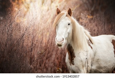 cute horse in the forest