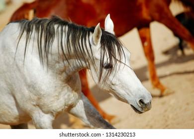 cute horse walks on the ranch