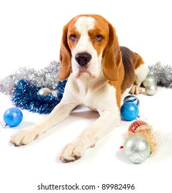 The cute hound and brilliant Christmas ornaments on a white background