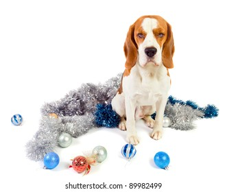 The cute hound and brilliant Christmas ornaments