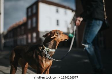 Cute hound dog walking by the sidewalk with sunlight.
