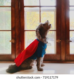 Cute howling dog dressed in red superhero costume for Halloween