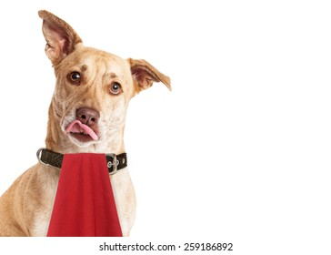 A cute hungry mixed breed dog wearing a red napkin while licking her lips