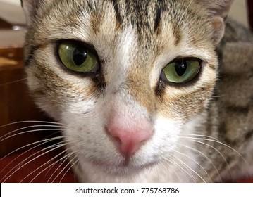 Cute and innocent cat