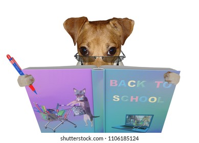 Cute jack russel dog read a book for back to school