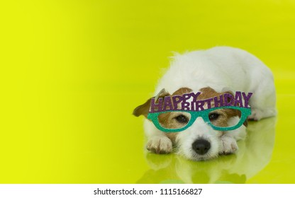 CUTE JACK RUSSELL DOG LYING DOWN AND WEARING HAPPY BRITHDAY GLASSES FOR A CELEBRATION PARTY. ISOLATED ON YELLOW BACKGROUND