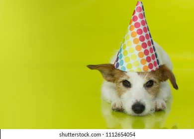 468ef6a88f68a CUTE JACK RUSSELL DOG WEARING A COLORFUL PARTY HAT ISOLATED ON YELLOW  BACKGROUND. BANNER SPACE
