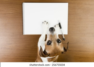 Cute Jack Russell terrier dog making notes in the album white sketch book. Empty space you can put your information. Looking to the camera