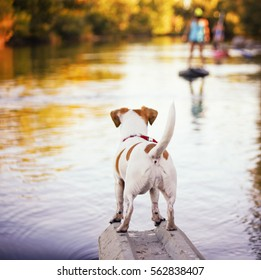 a cute jack russell terrier enjoying the river outdoors on a summer day toned with a retro vintage instagram filter effect