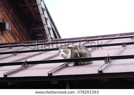 cute japanese cat on roof japanese stock photo edit now 378201343 rh shutterstock com