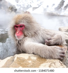 Cute japanese snow monkey sitting in a hot spring. Nagano Prefecture, Japan.