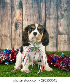 Cute King Cavalier puppy sitting in the grass outdoors with red, white and blue garland behind him wearing a Patriotic star.