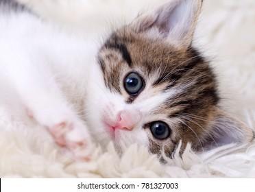 Baby Cat Images Stock Photos Vectors Shutterstock