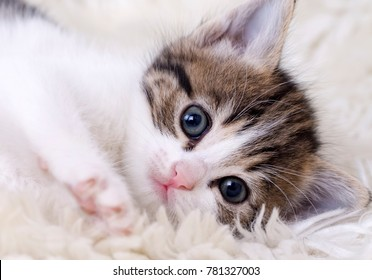 Baby Cat Images, Stock Photos \u0026 Vectors