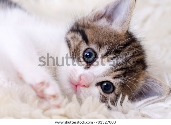 Cute Kitten Baby Cat Stock Photo Edit Now 781327003