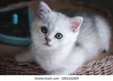 Similar Images Stock Photos Vectors Of Cat Blue Angora Sweater