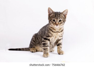 The cute kitten cat