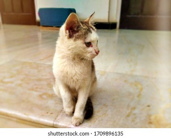 Cute Kitten Cat, White Brown, Sitting on the marble floor, Cat Portrait
