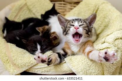 Cute Kitten Cats