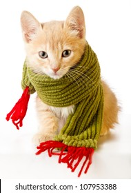 Cute kitten with christmas scarf