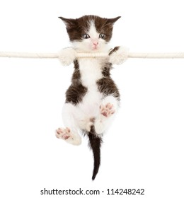 a cute kitten is climbing on the rope. isolated on a white background