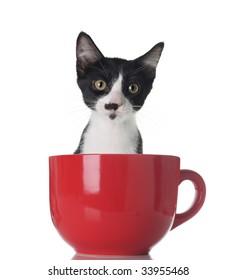 Cute Kitten In A Cup