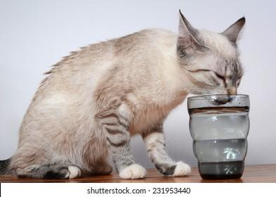 cute kitten drinking