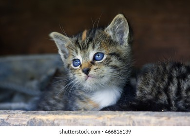 Cute Kitten Face