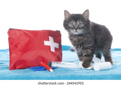 Cute kitten with first aid kit isolated