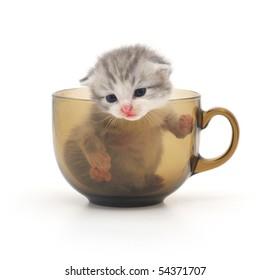 cute kitten in glass cup