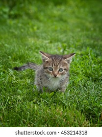 A cute kitten in the grass looking at the camera curiously