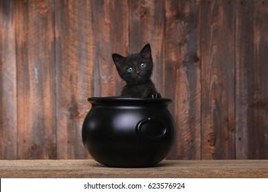 Cute Kitten in Halloween Cauldron on Wood Background