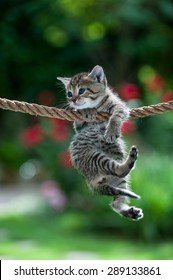 Cute kitten hanging on the rope