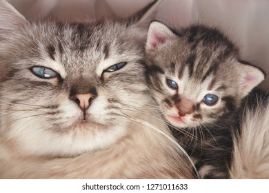 Cute kitten and her mother
